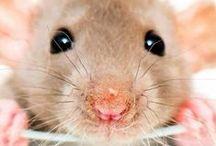 10 ★ Mäusi Mäusi Mäusi ★ / Mäusiiiiiiiii und Rattiiiiiiiis