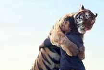 tiger, my love