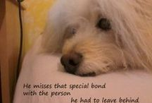 """Pet Loss RADIO w Brent Atwater / Pet Loss RADIO 24/7 weekly Podcasts to positively comfort, support and  help heal your heart from Pet loss. """"Alive Again""""  show on www.PetLifeRadio.com"""