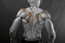 Anatomy References / referencias anatómicas humanas y variadas para artistas arte escultores etc