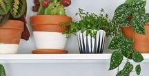 Plantes d'intérieur | House plants / Et si on vivait au milieu des plantes ?  Inspirations autour des plantes d'intérieur pour décorer sa maison ou son appartement : pot de fleur, pot suspendu, paniers, cactus, ensoleillement, plantes dans une salle de bain, dans le salon, la cuisine et la chambre, figuier, ficus, orchidées, bonsaïs, plantes dépolluantes, aromates et plantes aromatiques...