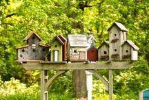 Birdhouses & Butterflies
