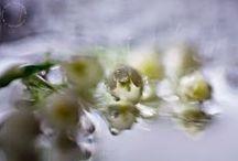 my Elfinium, my photos / my photographs