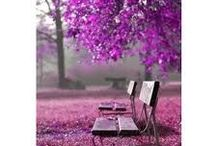 .purple / 'I only wanted to see you laughing in the purple rain'  Prince / by Laura Richards