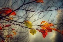 Autumn / Fall is a most beautiful time of year with its wonderful golden colors. / by Amberlyn