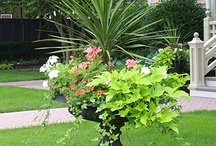 Container gardening and Raised Beds / by Connie McKenzie