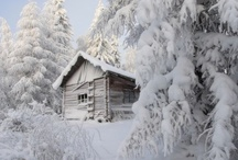 winter wounderland / by Denise Smith Wood