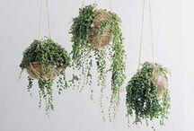 Plants & Garden / by Isabella Letitia
