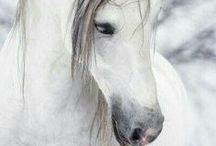 Equine Horse Community / All Horse Lovers, message Claudia  https://www.pinterest.com/lenina01/   or my self https://www.pinterest.com/iluvcarats/  you may also leave a message on the red add me pin below to be added, 10 pins per session. This board is beautiful because of it's contributors. Please take a moment to look at their individual boards as well to find many more amazing pins that you will want to follow.  Also here is the link to Claudia's awesome blog https://www.lenina01.at