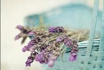 Flores y jardines / Ideas de flores, plantas y jardines para llenar de vida el hogar