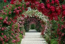 Gardens / Beautiful gardens are so relaxing and great to wander around.