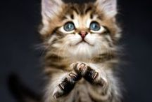 Kittens So Cute / Photos of Extremely Cute Kittens