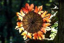 Saisons : automne