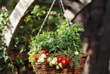 Growing Food, etc.