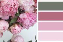 Find your palette / Colors