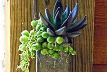 succulents / arrangements with succulents