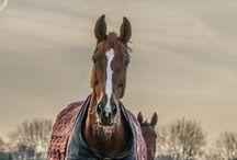 Onze paarden en pony's / Prachtige foto's van onze paarden en pony's!