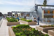 Sustainability / green buildings, vertical garden, urban farming, eco and sustainable living