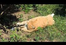Pusia / Kocica imieniem Pusia