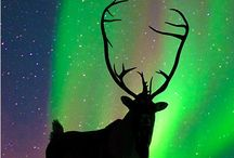 Aurora lights / by Carla Van Galen