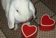 Kaniner / Bunny - Rabbit / Kaniner :) Bunnies *** Please pin politely: up to 10 per day * Thank you  *** / by Inger Johanne