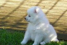 Pets / UK Classified Ads - Pets for sale in UK.