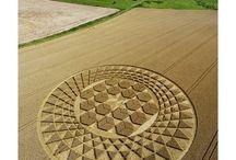 Crop circles / by Carla Van Galen