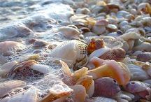 Sea shells / by Carla Van Galen