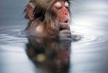 Monkeys/2 / by Carla Van Galen