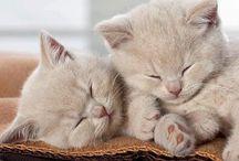 Cats/2 / by Carla Van Galen