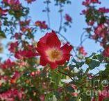 Kon Photo World - Flowers / Flowers