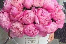 FLOWERS / Beautiful flower banquets and professional flower arrangements.