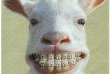 We love braces / Hatcher Orthodontics Loves Braces
