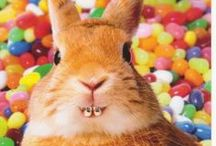 Spring / Hatcher Orthodontics wants to celebrate Easter with you