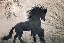 Horses / Beatiful horses