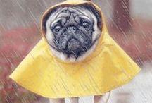 Pioggia Gif