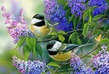 Uccelli Gif