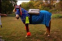 HTCAA Halloween-Horses / by Horse Trails & Camping Across America
