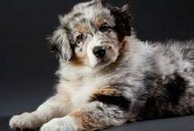 Sweet big dog / Sweet big dog
