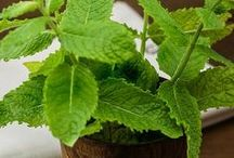 Herb Gardening Ideas
