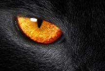 ❀ ✿ Black & Orange ✿ ❀