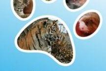 Музей Спасенных животных / Челябинский музей спасенных животных за год посетили 1 тыс. 428 человек – единственная в России галерея памяти, созданная в честь выживших зверей