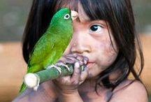Birdies / by Ray Summer