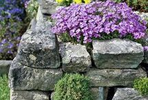 Rock gardens and walls