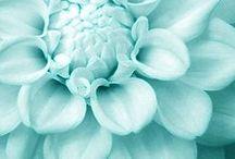 ♥ aqua blues  ♥