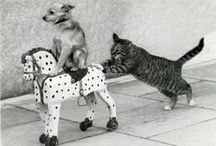 Gotta love animals