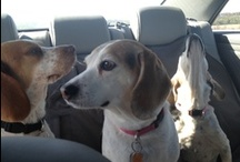 My doggies / by Nicole Thompson