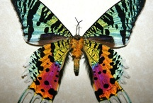 Butterflies / by Edith Tergau