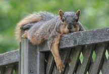 Squirrel / by Inwishs