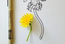 Sketch 'n' Draw